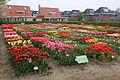 Hortus Bulborum 2014-04-24-02.jpg