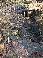 Huge Pipe Trestle - Don't Fall Off - panoramio.jpg
