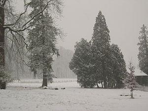 Image of Arboretum de Grignon: http://dbpedia.org/resource/Arboretum_de_Grignon