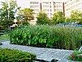 Ibaraki-Univ-Ami-FrontGarden01.jpg