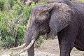 Impressions of Serengeti (138).jpg