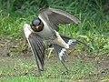 In the Air (8715152305).jpg