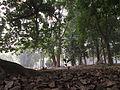 Indian Botanic Garden - Howrah 2012-01-29 1677.JPG