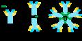 Inmunoglobulinas-tipos.png
