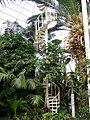 Internal, Palm House, Sefton Park (5).jpg