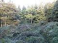 Iron Age settlement in Danefield Wood.jpg