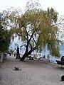 Isola dei pescatori - panoramio - Emanuela Meme Giudic… (1).jpg