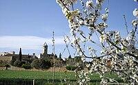 Jafre-primavera.jpg