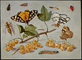 Jan van Kessel (I) - Butterflies and Insects - WGA12140.jpg