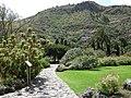 Jardín canario 12.JPG