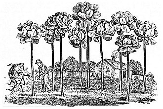 Jersey cabbage - Jersey kale, as illustrated in The Farmer's Magazine, 1836.