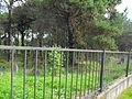 Jewish cemetery in Rakov 1f.jpg