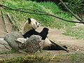 Jielbeaumadier panda geant 2 madrid 2014.jpeg