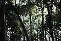 Jim Corbett Forest 1.jpg