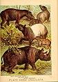 Johnson's household book of nature (Plate XXXIV) (7268663044).jpg