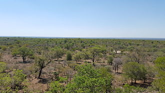 Lowveld vegetation of the Kruger National Park KNP Landscape.jpg