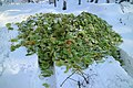 Kaiserwald Salat.jpg