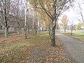 Kastryčnicki District, Mogilev, Belarus - panoramio (754).jpg