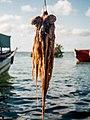 Kilwa Octopus.jpg