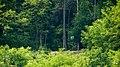 Koronowo - widoczny z ulicy Bydgoskiej ,15 punkt widokowy położony nad ubogim domkiem. - panoramio.jpg
