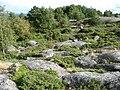 Kråkskär enris och berg 2010.jpg