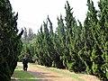 Kunming Botanical Garden - DSC02719.JPG
