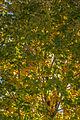 L'automne au Vieux-Port de Montréal (15276754017).jpg