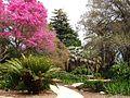 LA County Arboretum - knoll.jpg