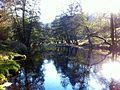 La rivière Ance (Livradois-Forez).jpg