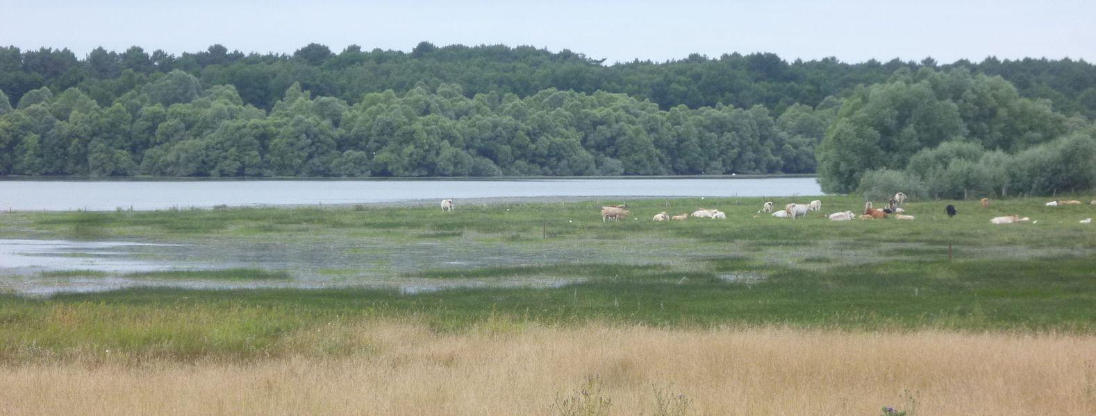 Prairies humides du Lac de Rillé - Retenue de Pincemaille