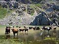 Lac guelmim en Kabylie.jpg