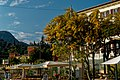 Lago di Garda - Garda - Lungolago Regina Adelaide - View North on a still flowering Mimosa Tree.jpg