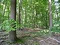 Landschaftsschutzgebiet Waldgebiet bei Neuenkirchen Melle - Im Wald- Datei 2.jpg