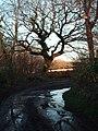 Lane to Little Hills, Welsh Moor, Gower - geograph.org.uk - 1092164.jpg