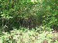 Langenfeld Nähe Haus Graven 0002.jpg