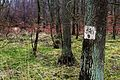 Lasy okolic Dlugiej Gosliny (4).JPG