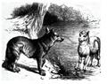 Le loup et agneau G-F Townsend 1867 GB.png