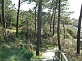 Le parc de l'estuaire - panoramio.jpg