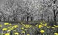 Le printemps en Pologne.jpg