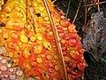 Leaves-6 (259302014).jpg