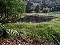 Lengshuikeng Wetland 冷水坑濕地 - panoramio.jpg