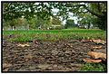 Levelek - panoramio.jpg