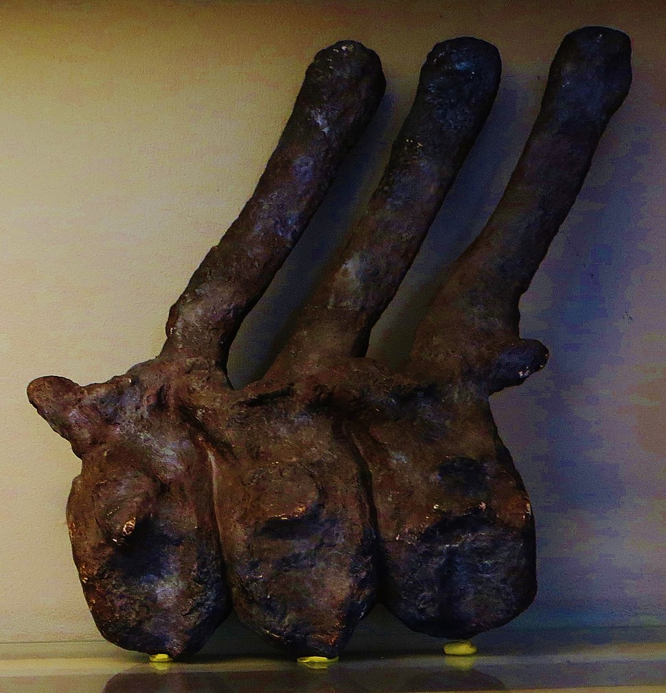 Lexovisaurus durobrivensis vertebrae
