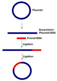 molecular cell biology lodish 4th edition pdf free download