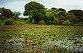 Lily pond, Castle Kennedy gardens - geograph.org.uk - 633212.jpg