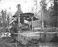 Loggers and donkey engine beside railroad track, Aloha Lumber Company, ca 1921 (KINSEY 26).jpeg