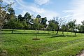 Looking NE at Fruit Garden and Nursery - Mount Vernon.jpg