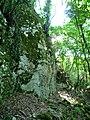 Lovech, Bulgaria - panoramio (61).jpg