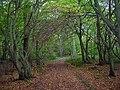 Lumberpit Lane, Great Home Wood - geograph.org.uk - 70494.jpg