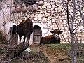 Lura Albania kulla 2.jpg